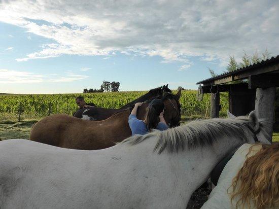 El Galope Farm & Hostel: 3