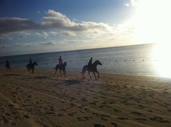 The St. Regis Mauritius Resort: horses on the beach