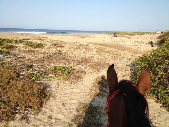 Gecko Rock Resort : Horseback riding on the beach