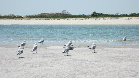 Ipswich, ماساتشوستس: Crane Beach