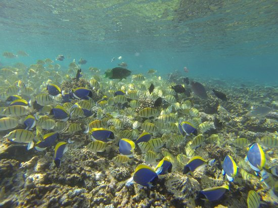 W Maldives: The house reef teeming with fish