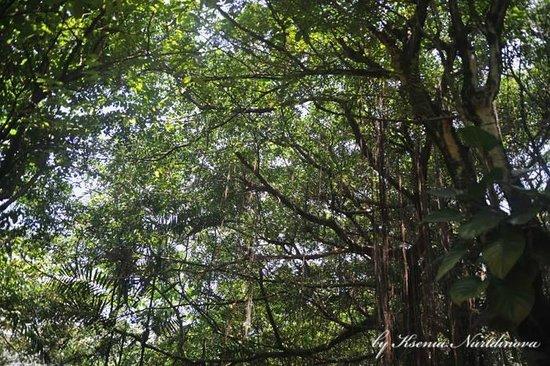 Kuala Lumpur Bird Park : Куала-Лумпурский парк птиц