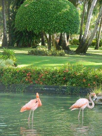 Catalonia Bavaro Beach, Casino & Golf Resort : Территория отеля