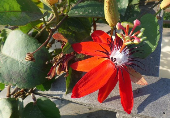 Aye Yar River View Resort : Blume in der Morgensonne