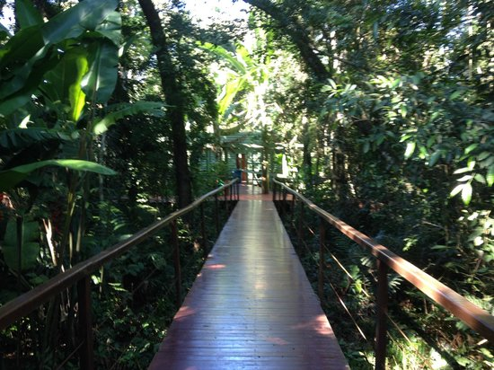 La Cantera Jungle Lodge: Pathways leading to the rooms