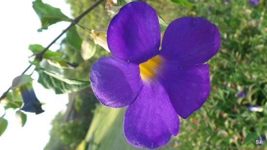 Aye Yar River View Resort : wunderschöne Anlage mit Blumen