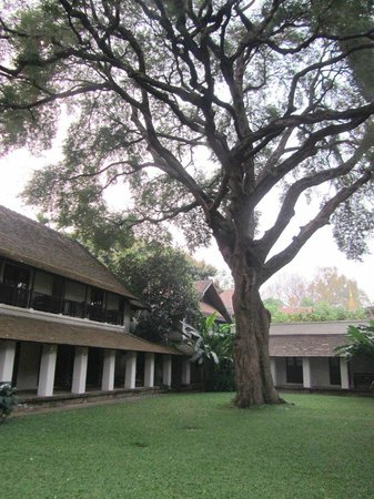 Tamarind Village: 'The' Tamarind tree