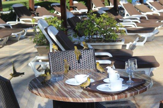 Royam Hôtel : Les tisserins profitent des restes du petit déjeuner...