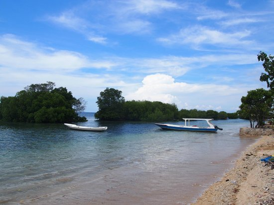 Mangrove Forest Nusa Lembongan : beach