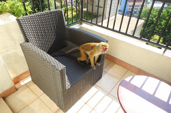 Hotel Thilanka: гость