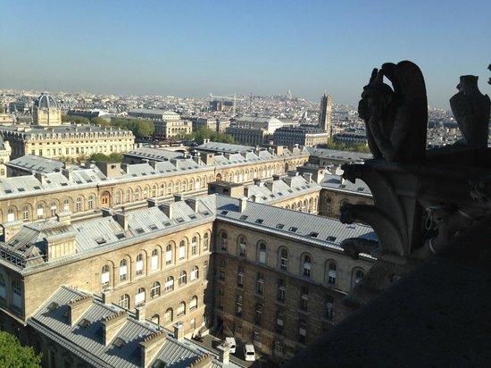 Tours de la Cathedrale Notre-Dame : Обитатель