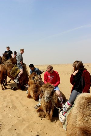 Anda Guesthouse : camel dismounting