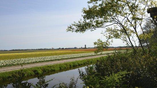 Hotel Den Haag-Wassenaar: Bulb fields at Keukenhof