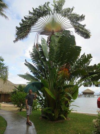Royal Huahine : Beautiful grounds