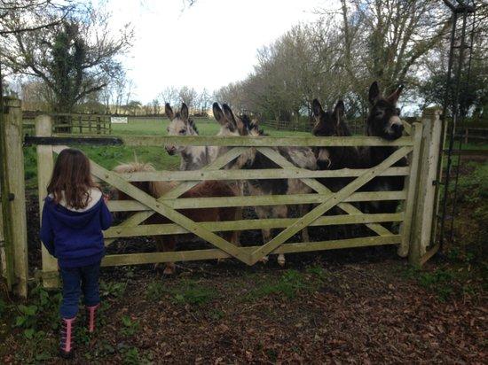 Way Barton: donkeys
