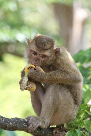Monkey Hill: Monkey