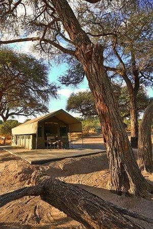 Mogothlo Safari Lodge : View of tent