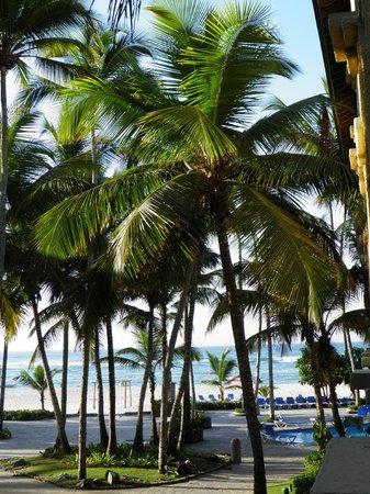 Coral Costa Caribe Resort & Spa: vue de la chambre...