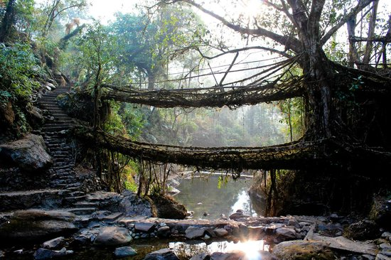 Double Decker Living Root Bridge: The double decker root bridges