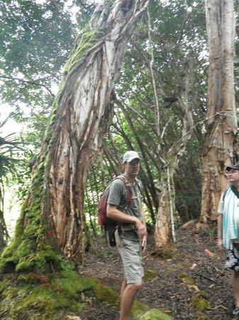 Hike Maui: Our fearless guide Erik