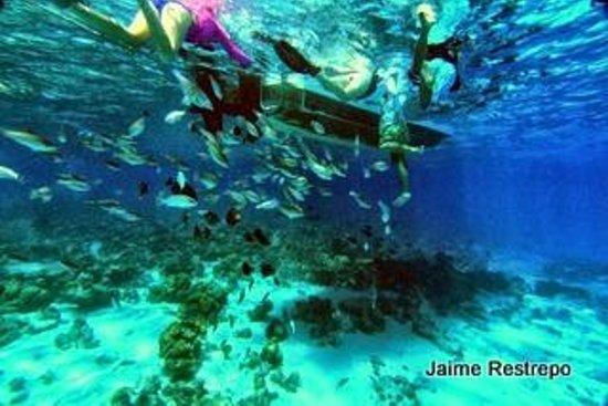 San Andres Diving & Fishing: Peces bajo el Bote