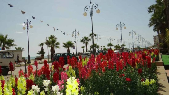 Les Palmiers Beach Hotel : The beauty of the Palm promenade in spring-Finikoudes