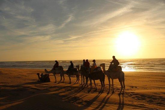 Ranch de Diabat: dromadaires au coucher du soleil