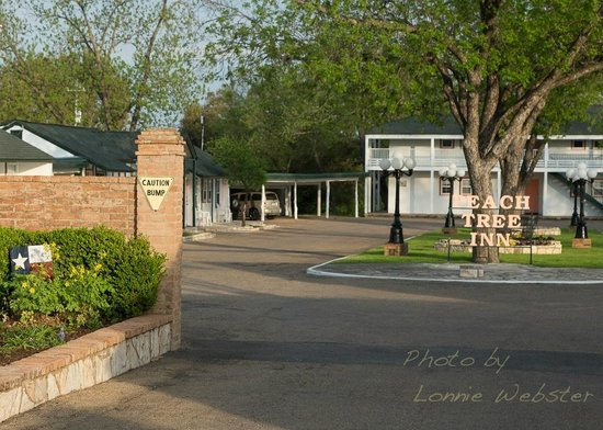 Peach Tree Inn & Suites: Looking into the Peach Tree Motor Inn