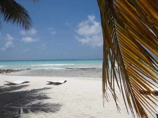 Excursion a la Isla Saona: Isla Saona
