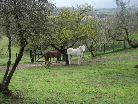 Fattoria Montalbano: Animali della fattoria