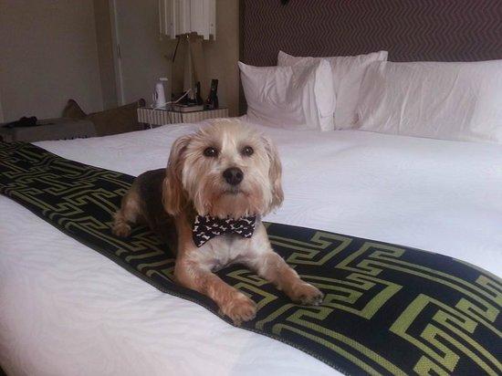 Kimpton Hotel Palomar Philadelphia : Mr. Bear chilling on the bed