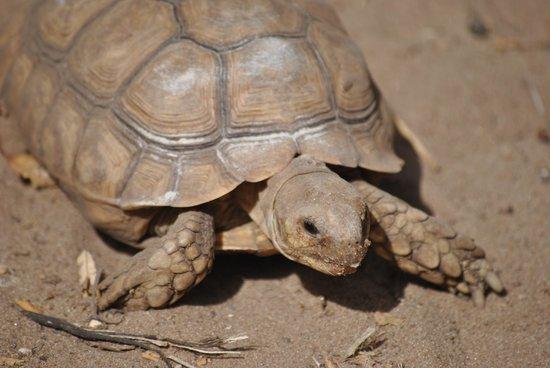 Bakotu Hotel: Tortoise