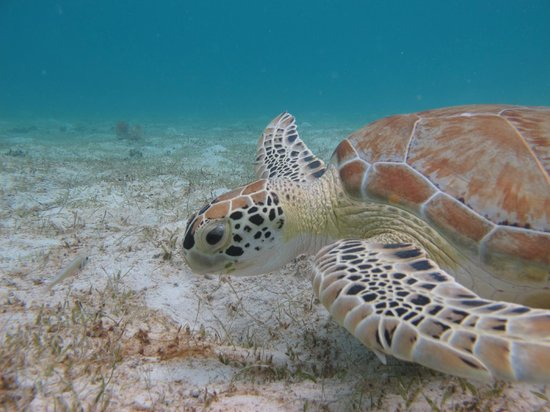 Caneel Bay Kayak, Hike & Snorkel Adventure - Virgin Islands Ecotours : Close up of this awesome guy!