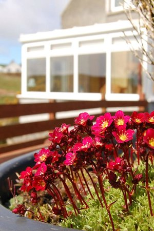 Mull of Galloway Holidays: Auld Smiddy Flowers with view to conservatory