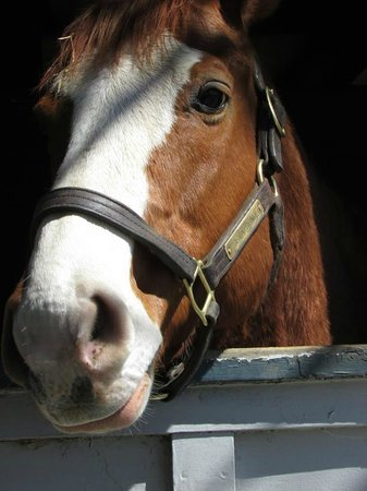 Kentucky Horse Park : Retired racing horse