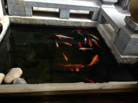 Zen Garden Hotel (Wuyi Yard): Goldfish pool in courtyard
