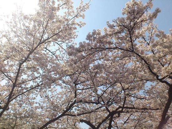 Matsukawa Park