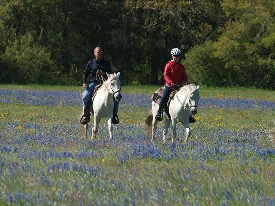 BlissWood Bed and Breakfast Ranch: Horseback riding among the wildflowers