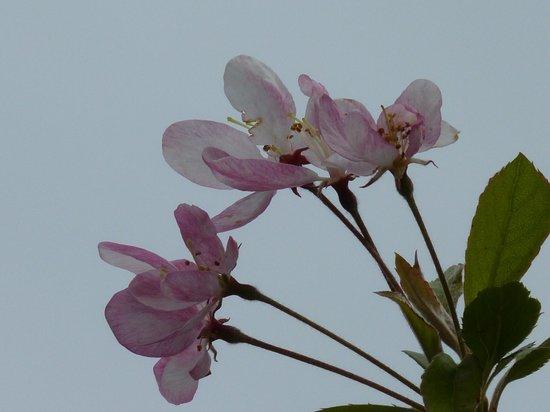 Hever Castle & Gardens: Blossom at Hever