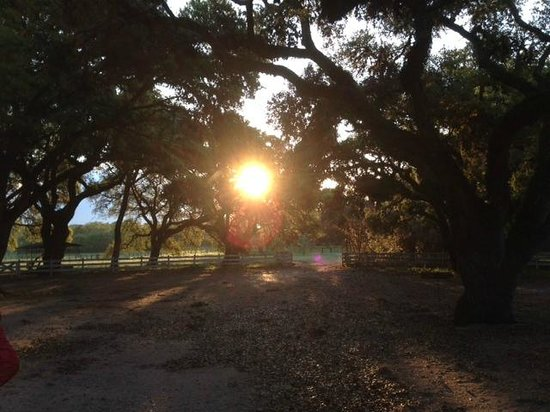 BlissWood Bed and Breakfast Ranch: Sunrise from the front porch of Texas Farmhouse