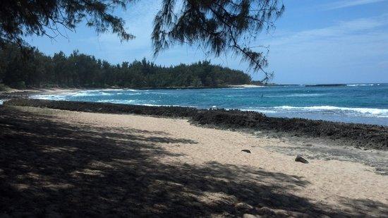 Turtle Bay Resort : hiking trail
