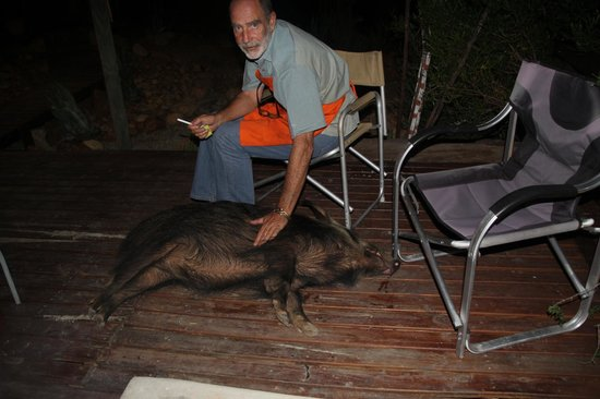 Zwartberg View Mountain Lodge : Jann and Celeste the bushpig
