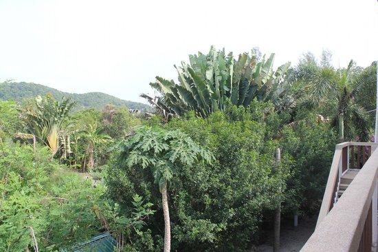 The Frangipani Langkawi Resort & Spa : Green