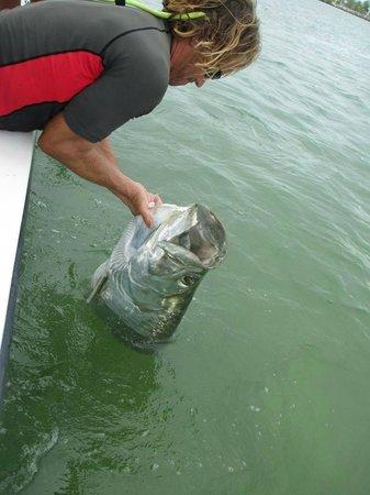 Lower Keys Adventure Charters: tarpon to the boat