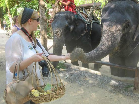 Siam Safari: You are able to buy fruit to feed the elephants at the end of the tour