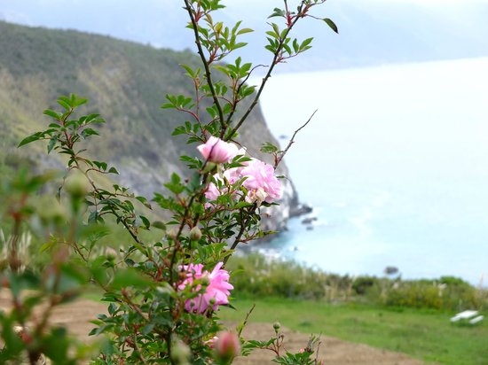 Lucia Lodge Restaurant: The flowers along the California coastline are vibrant