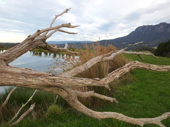 Eagles Nest Retreat: Natures sculptures at Eagles Nest 2