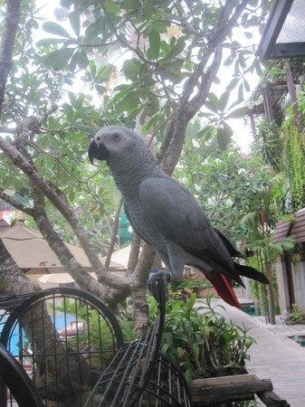 Burasari Resort: The awesome Parrot