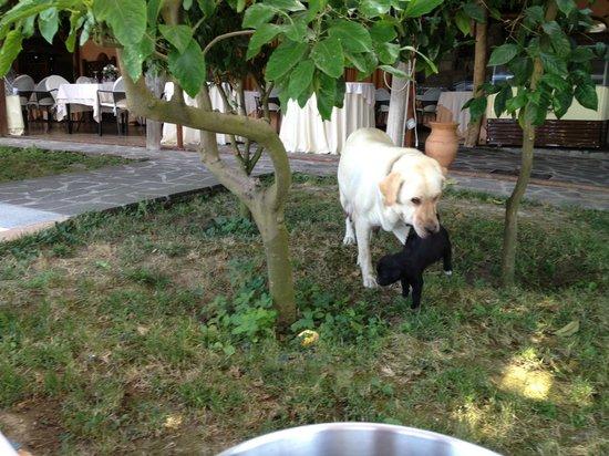 Relais Villa Caprile: Lovely dog!!!