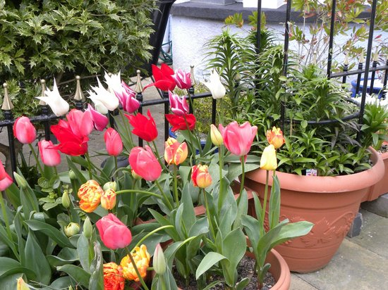 Westbourne Guest House: Beautiful Tulips on front porch
